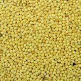 Wholesale Sorghum VOLINCO from china suppliers