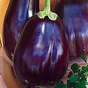 China Black Beauty Eggplant Heirloom on sale