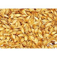 Wholesale malt from china suppliers