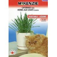 China McKenzie Seeds Catgrass Oats wholesale