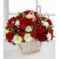 China Red Carnation NO.51 shanghai flower delivery wholesale