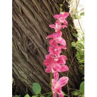 China Real Touch Flower Dendrobium Orchid in Fuchsia wholesale