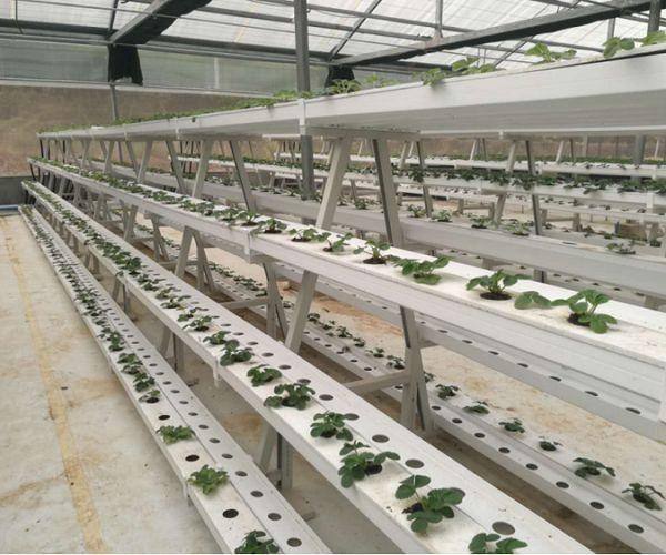 China Hydroponic Kits Hydroponic Home and Hobby System