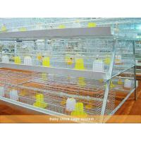 China Baby chick cage system wholesale