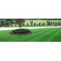 Buy cheap Kansas City Artificial Grass Installation from wholesalers
