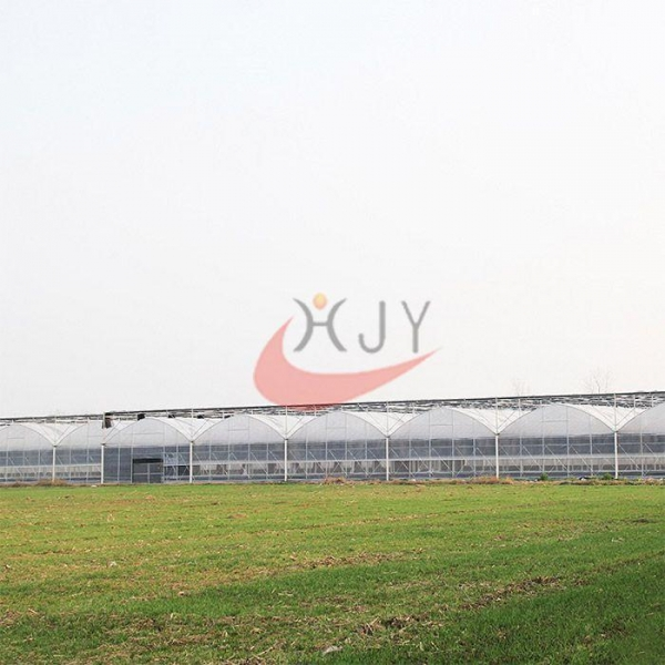 China Agriculture Plastic Large Multi Span Greenhouse for Sale