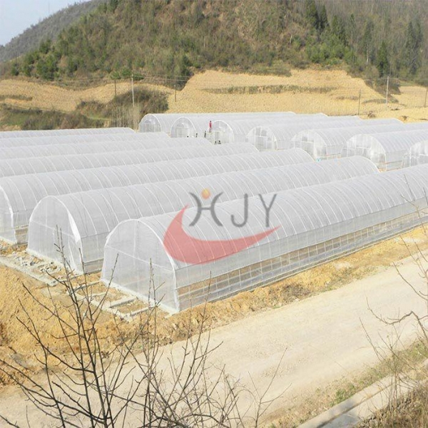 China Agricultural Single Span Plastic Film Greenhouse