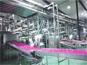 China flower microwave drying system within steam