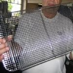 China Stainless Welded Mesh