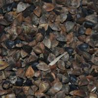 Wholesale Buckwheat with 14% Moisture, Suitable for Birds and Pets from china suppliers